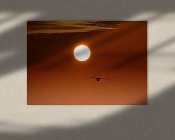 Into the Sun van Zeeland op Foto