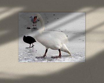 Zwaan en eend in de wintervijver van Nicky`s Prints
