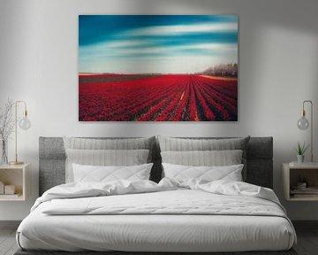 Tulpenfeld Rot von Dirk Wüstenhagen