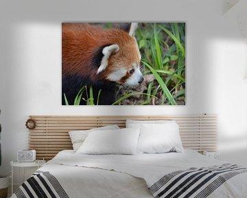 Rode panda von Dennis Mullenders