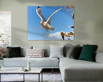 Seagulls in the air van PhotoArt Thomas Klee