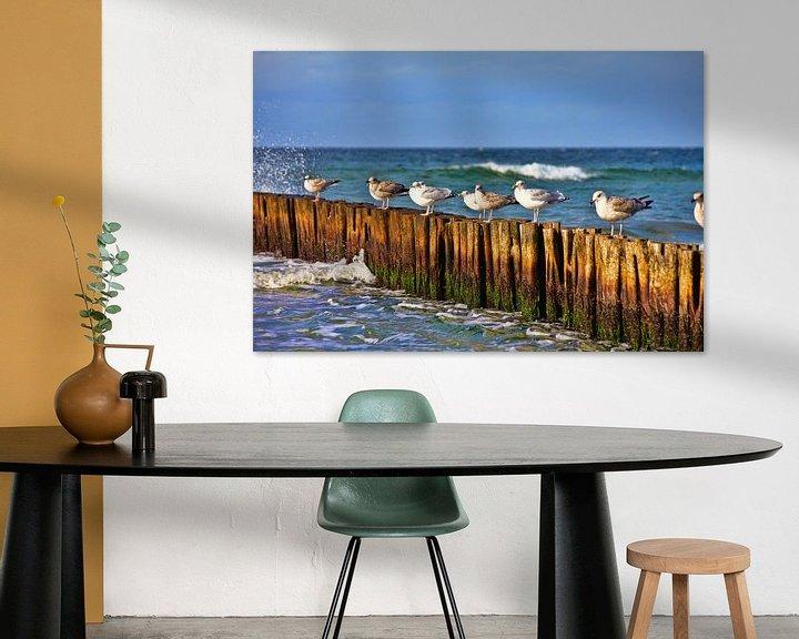 Beispiel: Möwen auf Buhnen von PhotoArt Thomas Klee