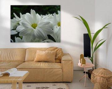 Witte bloem von Sanne Compeer