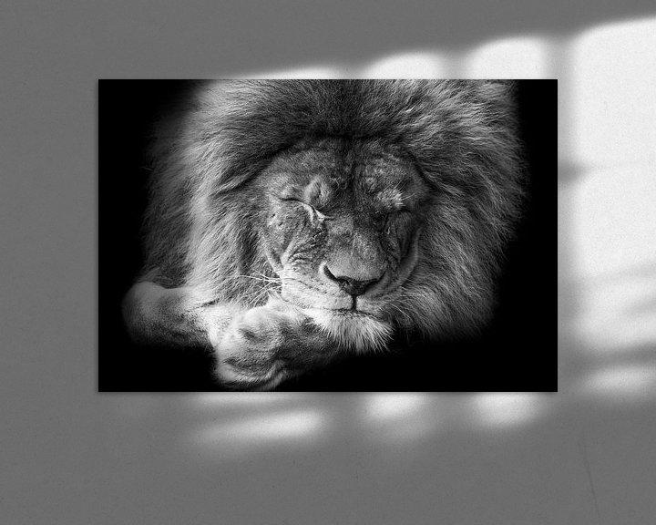 Beispiel: Black and white portrait sleeping lion von Michar Peppenster