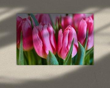 Rosa Tulpen von Ad Jekel