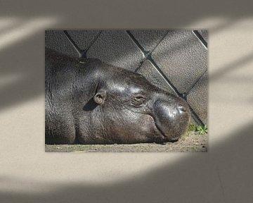 Nijlpaard von Sanne Compeer
