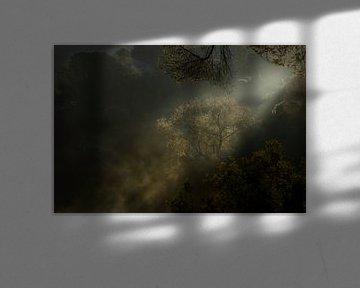 De eerste zonnestralen, boom en nevel van Jaap La Brijn