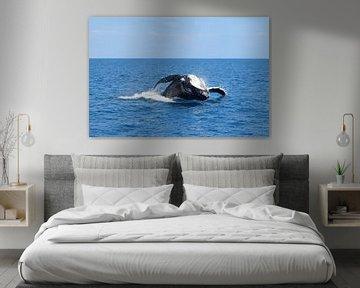 Sprong van een bultrug walvis sur Bianca Bianca