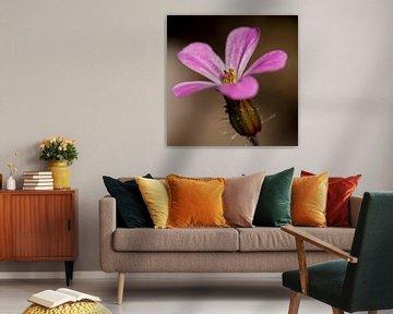 Bloem roze von Jantien van Dam