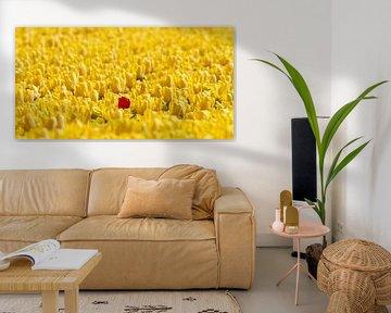 1 rode tulp in een geel bollenveld van Marcel Verheggen