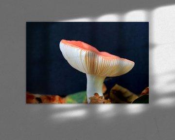 Großer Pilz auf Bett von Herbstblättern