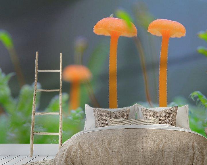 Sfeerimpressie behang: Kleine paddenstoelen op mosgrond van Mark Scheper