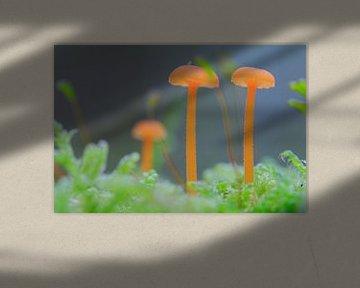 Kleine Pilze auf Moosboden