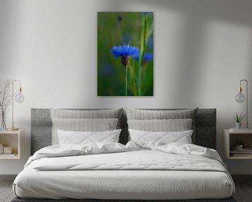 Single Blue korenbloem von Louis Kreuk