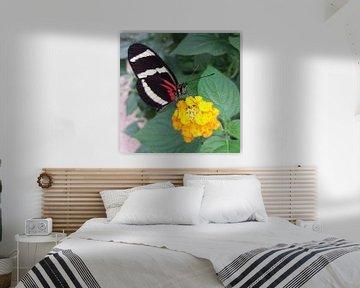 Een vlinder opzoek naar nectar van Yvonne Koppers