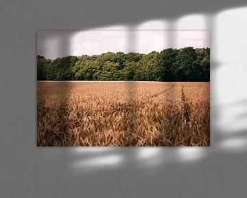 Het spoor door de velden. van Simon Peeters
