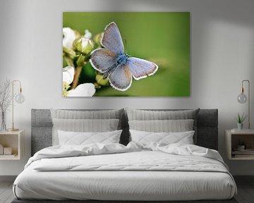 Heideblauwtje von Miranda Rijnen Fotografie