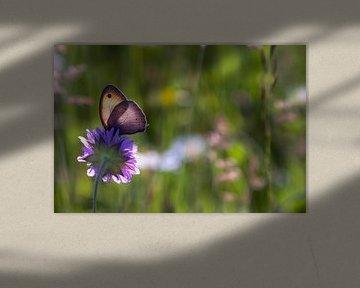Beautiful flowers  von René Pronk