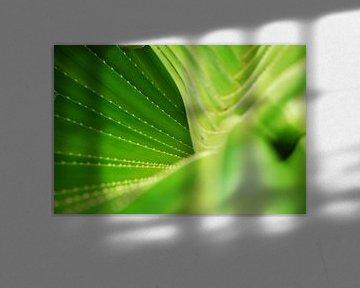 green twist von nick kooijman