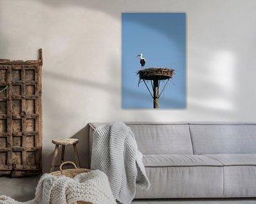 Ooievaar op nest sur Elise Favié