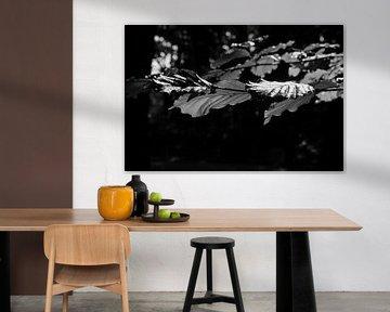 Zwart-wit herfst von Nel Wierenga