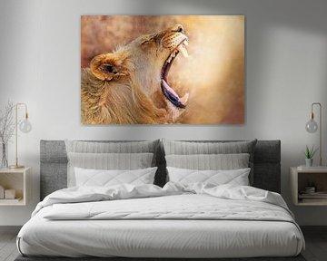 Lioness, South Africa wildlife van W. Woyke