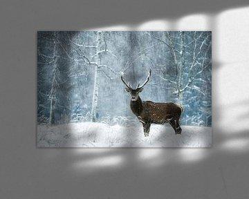 stiller Moment im wilden Schneetreiben von Daniela Beyer