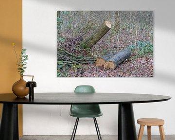 Fallen tree in a dutch forest van Micha Klootwijk