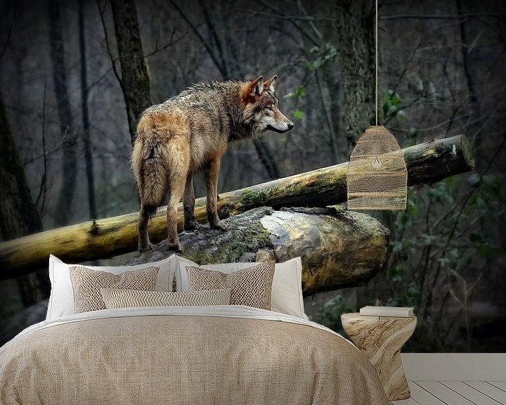 Sfeerimpressie behang: Wolf op een mistige en regenachtige dag van Margaretha Gerritsen