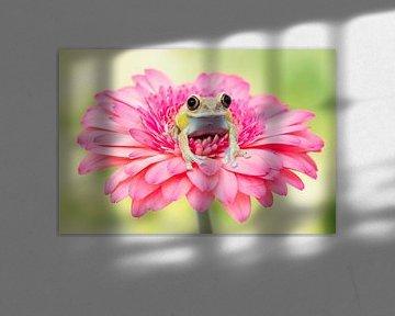 Pretty in pink von Joyce Beukenex