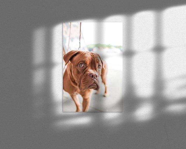 Beispiel: Boxer in Nahaufnahme von Atelier Liesjes