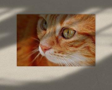 Close-up van rode kat
