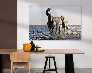 Twee paarden in het water