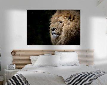 Nahaufnahme eines Löwenkopfes von Atelier Liesjes