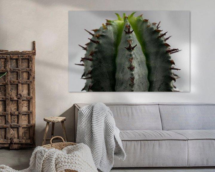 Sfeerimpressie: Cactus van Kimberly Zanting