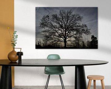 Boom silhouet van Sammie van der Hooft