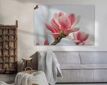 Magnolia in bloei von Ab Donker