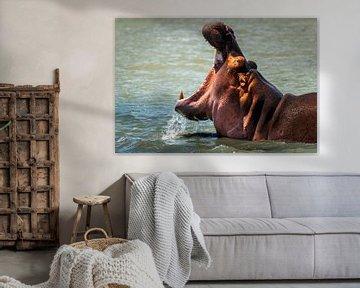 Nijlpaard in de rivier in Zuid Afrika van Rob Reedijk