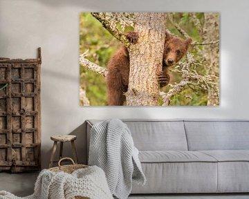 Een jonge Grizzlybeer