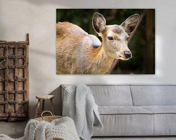 Tam hert in Nara, Japan van Marcel Alsemgeest