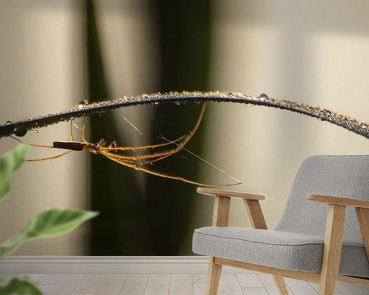 Sfeerimpressie behang: Spin in de ochtenddouw van Frederik lembreght