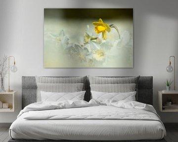 König der Blumenzwiebelfelder von Karla Leeftink