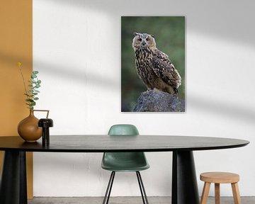 Eurasian Eagle Owl  *Bubo bubo* van wunderbare Erde