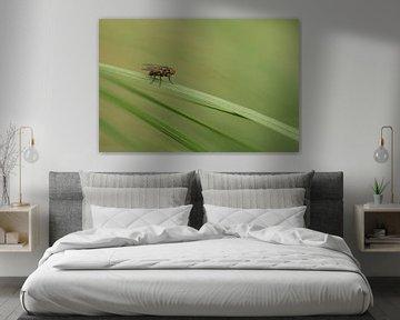 Vliegje in het groene gras