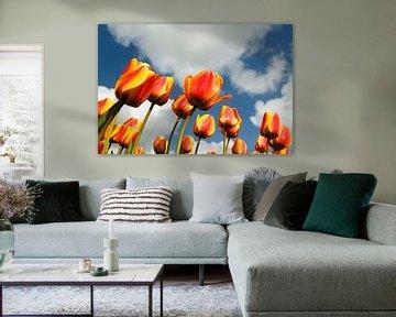 Tulpen von Dennis Schaefer