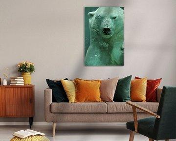 Close-up van zwemmende ijsbeer