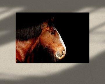 Hoofd van shire paard