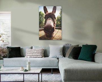 Nahaufnahme des Kopfes eines Esels