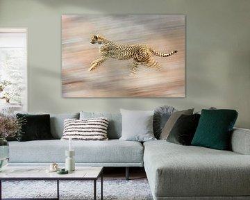 Le guépard sprinte à grande vitesse vers une destination inconnue sur jowan iven
