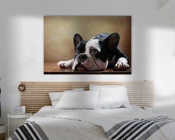 Französische Bulldogge sur Jana Behr